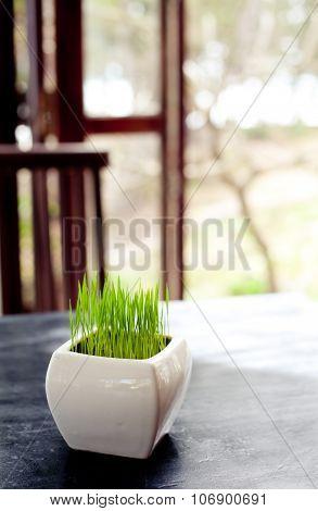 Green grass in a white flowerpot on summer, spring background