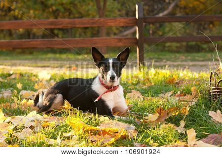 Mixed-breed dog outdoor portrait