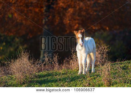 Small Horse Pony