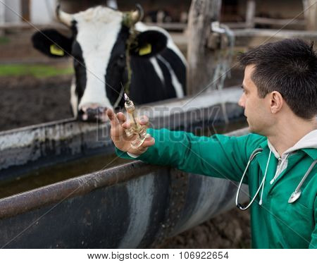 Veterinarian On Dairy Farm