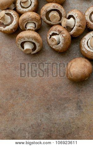 Fungus. Mushrooms on the table