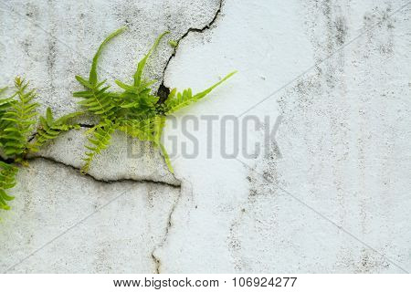 fern on vintage wall, Fern background and empty area for text, Nature on white background