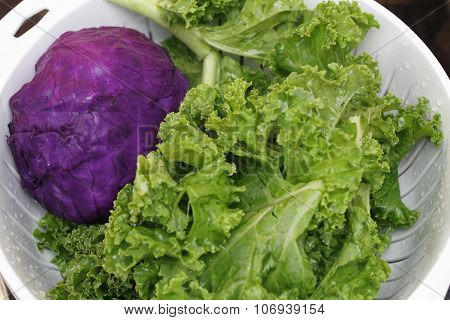 Whole Purple Cabbage And Kale
