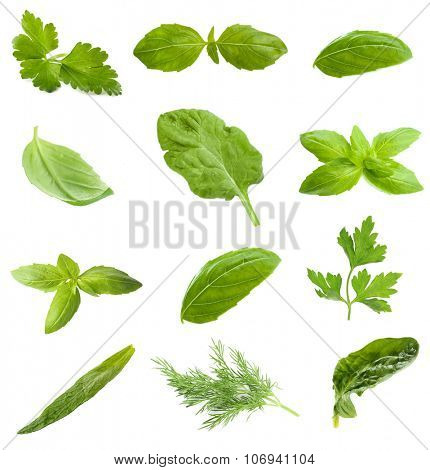 Collage with fresh green leaves of aromatic herbs, isolated on white