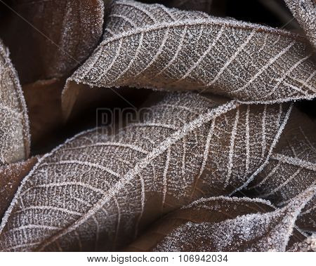 Autumn leaves covered with frost closeup