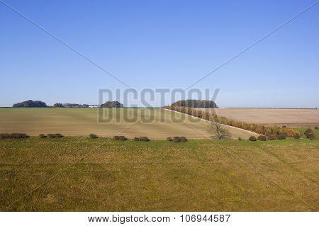 Grazing Meadows