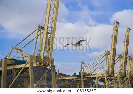 Seagull Flying Between Yellow Cranes