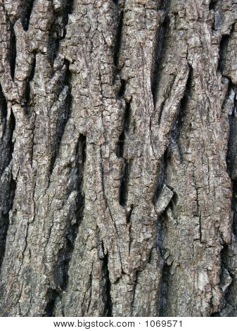 Walnut Tree Bark Background 1