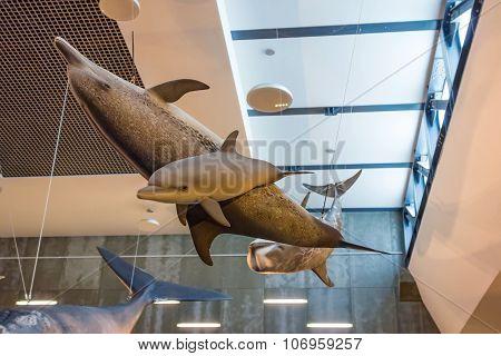 Whale Museum Museu Da Baleia, Canical, Madeira