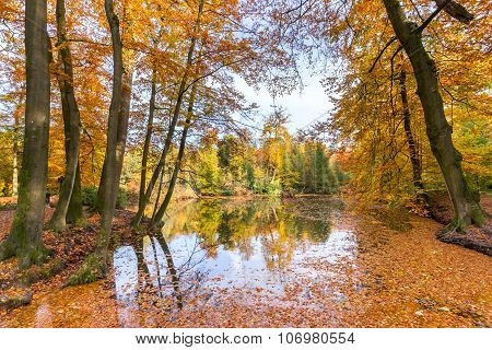 Forest Pond Covered With Autumn Leaves Of Beech Trees