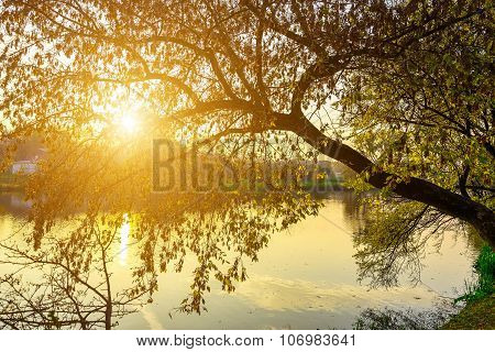 Colorful Branches Of Tree Over Lake At Sundown
