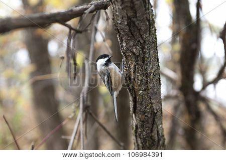 Bird House Sparrow