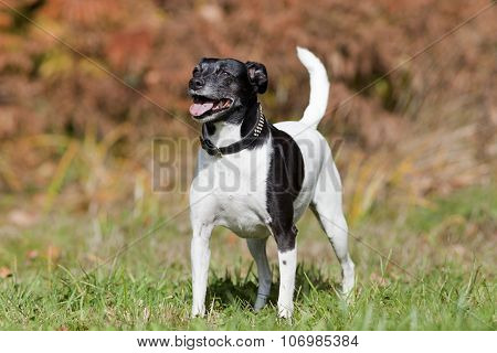 cute small dog on meadow outside
