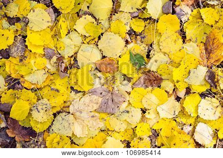 Detail Of Colorful Autumn Leaves On The Ground