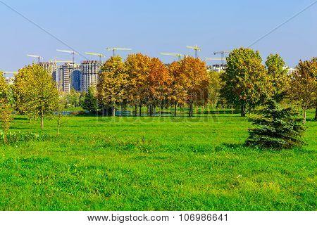 Autumn Park With Green Grass
