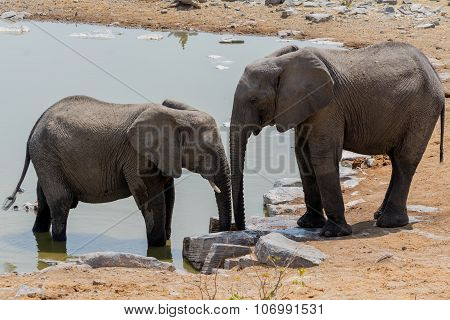 Elephant And Child At Waterhole