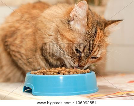 Cat Eats Dry Food