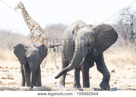 Elephant Family Near Waterhole