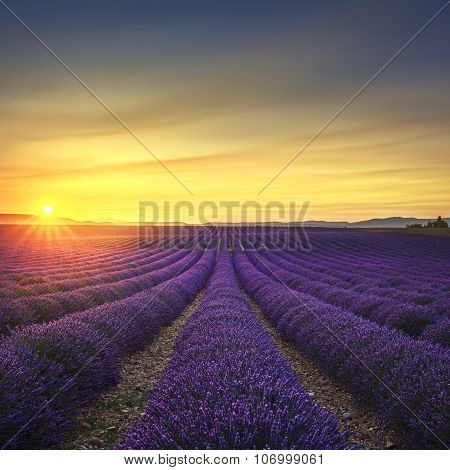 Lavender Flower Blooming Fields Endless Rows On Sunset. Valensole Provence France