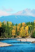 stock photo of steelhead  - a brilliant blue river flows toward a bend where bright yellow trees occupy the mid - JPG