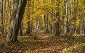 Постер, плакат: Winding Forest Path In Autumn