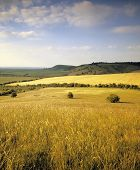 stock photo of farm land  - roliing countryside with crops farm land landscape - JPG