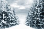 picture of cold-weather  - cold and snowy winter road with blue evergreens and grey clouded skies - JPG