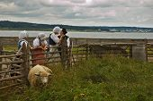 image of acadian  - kids of louisbourg hanging out by the farm - JPG
