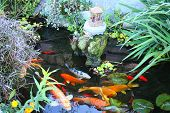 stock photo of koi fish  - Japanese lily pad spiritual garden with lush plants - JPG