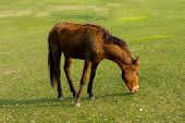 Постер, плакат: Dwarf Horse In A Pasture