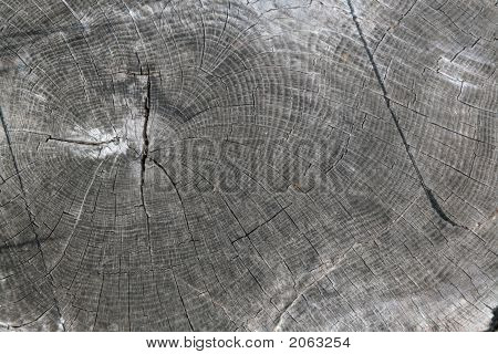Log End Grain