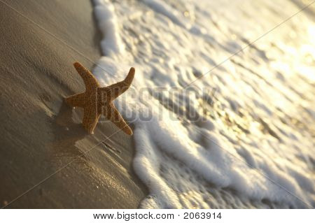 Seastar On The Beach