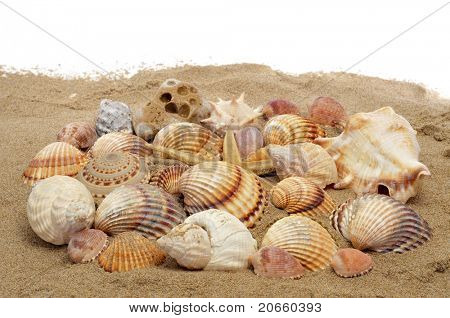 a pile of seashells and a seastar on the sand on a white background