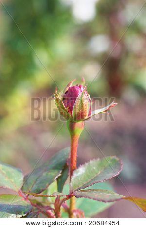 Jardín color de rosa