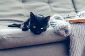 Lazy cat lying by warm woolen sweater and book on gray sofa. Winter or autumn cozy scene. poster