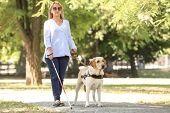 Guide dog helping blind woman in park poster