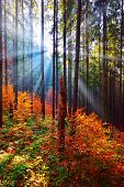 Warm autumn scenery in the forest, with the sun casting beautiful rays of light through the mist and poster