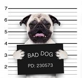 Mugshot Dog At Police Station poster