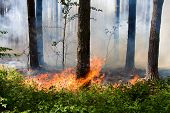 stock photo of fire extinguishers  - Fire in the summer pine forest with smoke - JPG