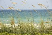 stock photo of dauphin  - Pier through the growing grass to see the ocean and beach behind it - JPG