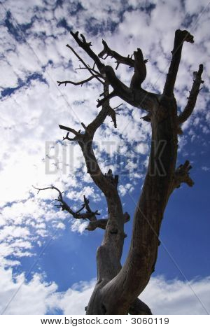 Dead Tree Silhouette On Blue Sky And Clouds In The Background