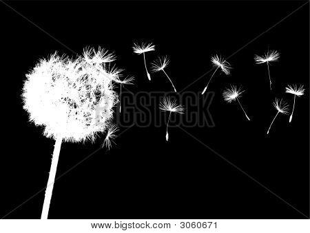 Single Dandelions