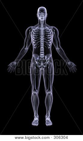 Xray - Full Figure Adult Male