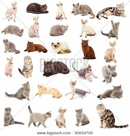 Collection Of A Cats
