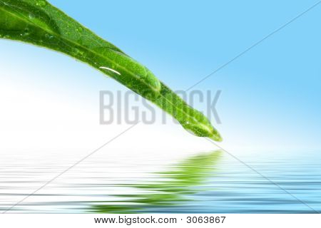 Green Leaf Of A Plant Above Water