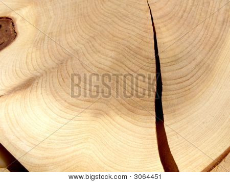 Cut Of Wood.