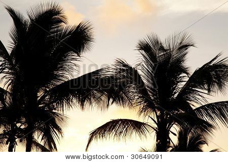 Palms And Sunset
