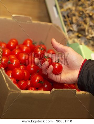 Holding Tomatoes