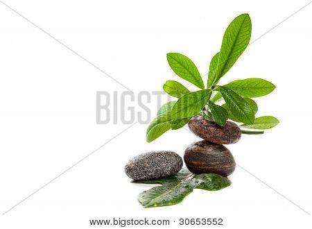 Wet zen stones with green plants in water drops