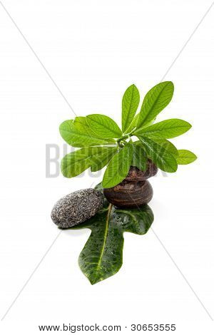 Wet zen stones with green plants in water drops